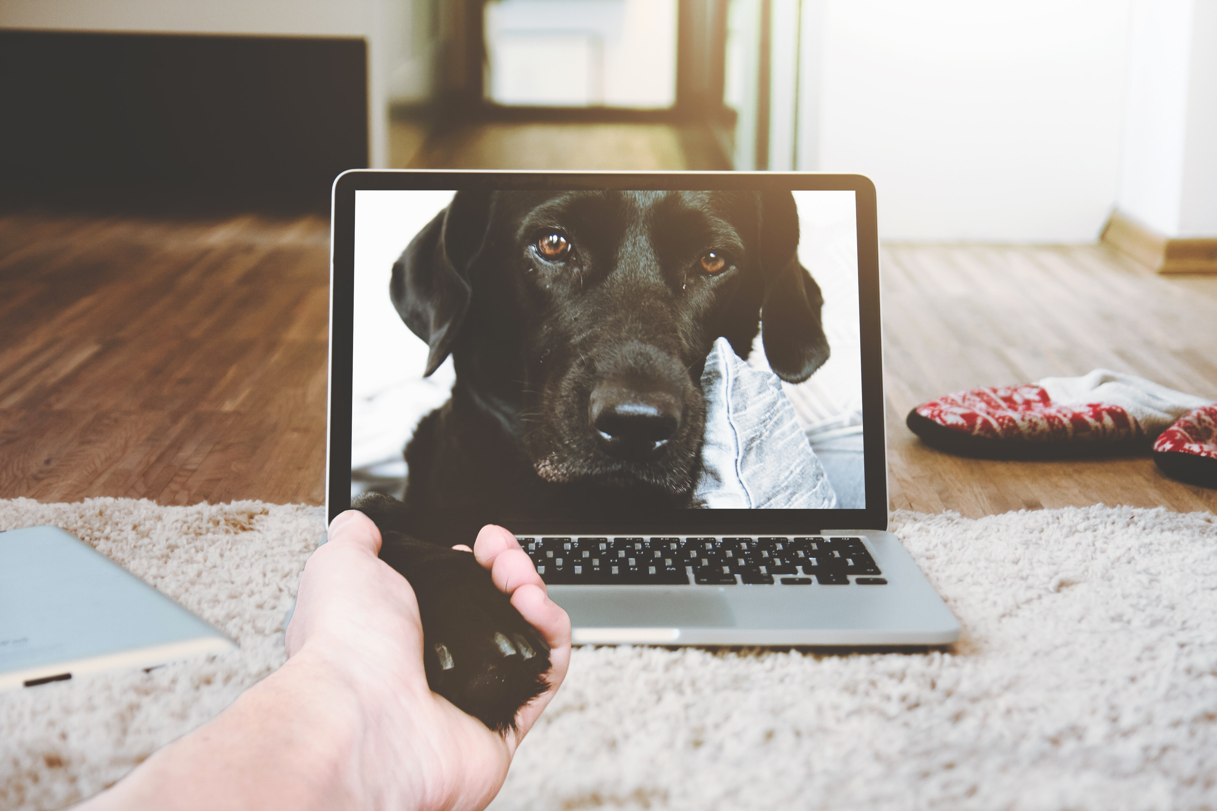 How to Start a Pet Blog - Create, Monetize and Quit Your Job